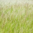 Grass in the meadow — Stock Photo