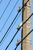 Pole with mountings and electric cables — Stock Photo