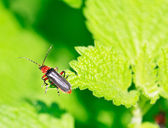Close up of the beetle sitting on the leaf — Stock Photo