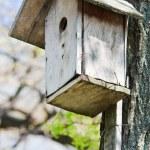 Homemade wooden bird house in spring — Stock Photo #4599481