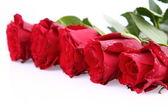 Fondo de rosas rojas — Foto de Stock
