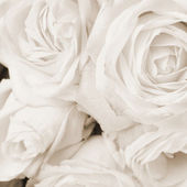 Rosas brancas em sépia — Fotografia Stock