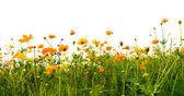 Forest of orange flowers — Stock Photo