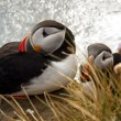 Two puffin on the rock - Latrabjarg, Iceland — Stock fotografie