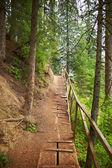 Sentier dans le bois — Photo