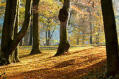 Autumn morning with sun and shadows in park — Stock Photo