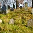 Foto de Stock  : Forgotten and unkempt Jewish cemetery with strangers