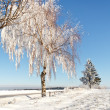 Winter field on a sunny frosty day — Foto Stock