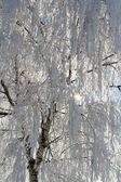青い空の上の冬雪枝 — ストック写真