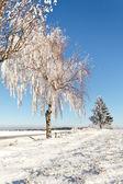 Na slunečný mrazivý den zimní pole — Stock fotografie