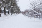 Snowy road — Stock Photo