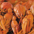 Background. Close-up view of boiled crayfishes — Stock Photo