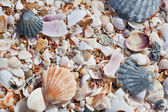 Beach background with sand and sea shells — Stock Photo
