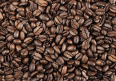 Elite coffee beans background — Stock Photo