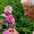 Senior man gardening - Stock Photo