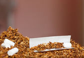 Hand rolling tobacco and paper — Stock Photo