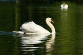 Schwan - Swan — Stock Photo