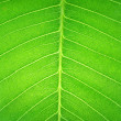 Texture surface in transparent leaf — Stock Photo #4170581