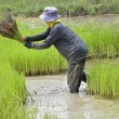 Stock Photo: Thai farmer