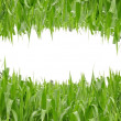 Small eye shape green grass — Stock Photo