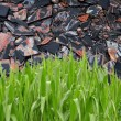 Stock Photo: Grass in front of stone sheet background