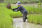 Thai farmer — Stock Photo