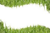 绿色曲线草的白色隔离背景 — 图库照片