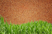 Green grass curve sand wall background — Stock Photo