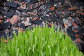 Grass in front of stone sheet background — Stock Photo