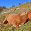 Stock Photo: The horse has a rest on a hillside