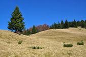 Autumn hillside — Stock fotografie