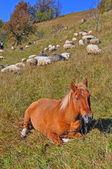 O cavalo tem um descanso numa colina — Foto Stock
