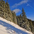 Foto Stock: Winter hillside.