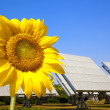 Beautiful sunflower and solar panel and power plant.Alternative energy conc - Foto de Stock  