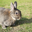 Stock Photo: Rabbit on the green grass