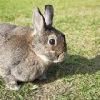 Rabbit on the green grass — Stockfoto