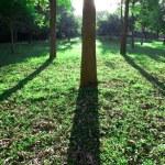 nascer do sol no parque, na manhã de primavera — Foto Stock
