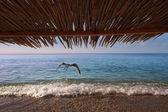 Sea Bamboo Seagull — Stock Photo