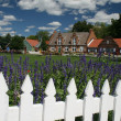 Dutch village — Stock Photo