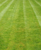 Vers gemaaide gras tonen strepen — Stockfoto