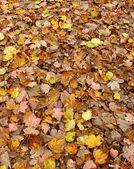 Rosa, gul, orange och brun matta av hösten lämnar — Stockfoto