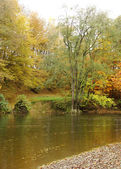 Autumn scene with river running through a forest — Stock Photo