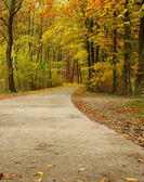 Autumn path next to the forest — Stock Photo