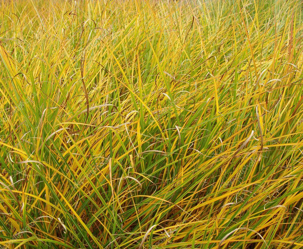 Картинки трава осенью