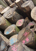 Stacked log cut trees tagged with fluorescent spray-paint — Stock Photo