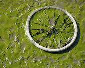 Dried up green river bed reveals muddy bicycle wheel — Stock Photo