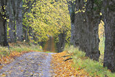 Countryside road in Autumn. — Stock Photo