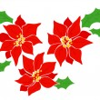 Poinsettia. — Stock Vector