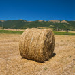 Rolling haystack in countryside. — Stockfoto