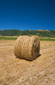 Rolling haystack in countryside. — Stock Photo
